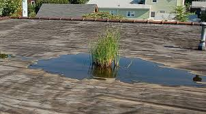 Flat Roof Repair in Honolulu